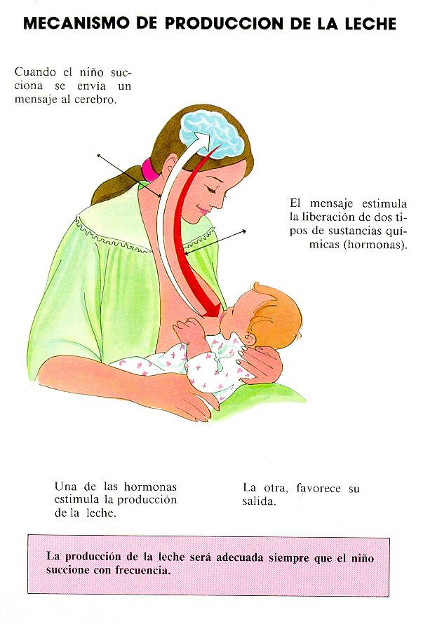Cuándoy cómo amamantar al niño?
